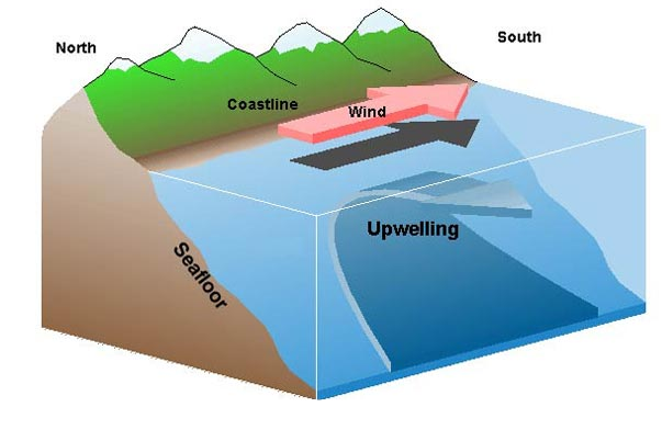 Upwelling pic